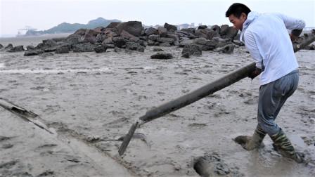 阿烽在泥滩找到一根大竹筒,竟然跑出一条大家伙,吓阿烽一跳