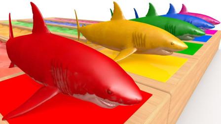超厉害!大卡车运来了5条鲨鱼,进水后竟然变成5种颜色!儿童玩具游戏故事