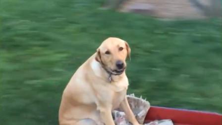 男孩与狗狗一起玩耍,结果不慎摔倒