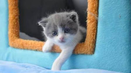 """快来吸!我国首只克隆猫即将满月 名叫""""大蒜""""与克隆原体同名"""