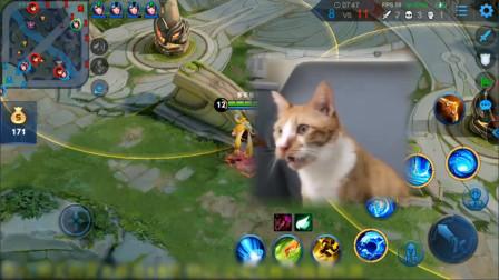 对猫放屁?王者荣耀骚白被自家猫咬