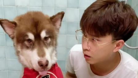 主人把狗狗关在厕所反省,狗狗做了一件事让他后悔不已