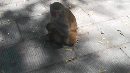 张家界国家森林公园的猴子