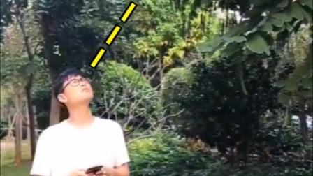 当你看到下垂的树枝,会忍不住跳起来拽吗?