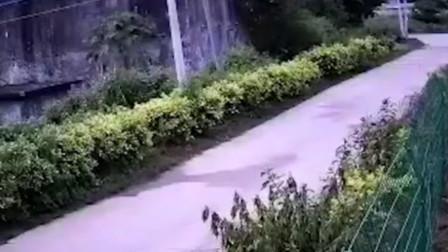 海南:三亚市天涯区发生4.2级地震 监控拍下地震瞬间