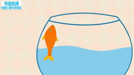 为什么在养金鱼之前要先培养鱼缸细菌科普知识英语学习