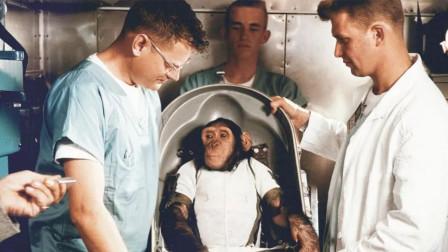 当年被美国送上天的猴子,时隔50年之后,现在它的生活怎么样?