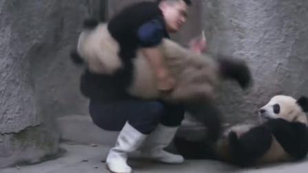 饲养员爸爸喂大熊猫吃药,熊猫百般拒绝,熊猫:不吃药药!
