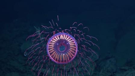 坐潜水艇到深海,遇见神奇生物,好似一只有魔力的大眼睛