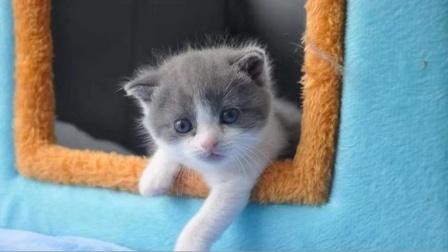"""克隆猫主人称不做宠物博主 会记录""""大蒜""""的日常"""
