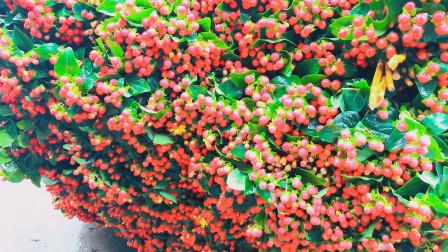 到斗南花市走走,挑选你喜欢的鲜花