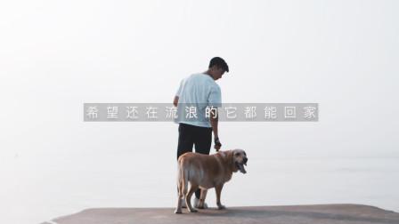 狗是人类的好朋友,如果你不能给它们一个归宿,但请不要伤害它们!