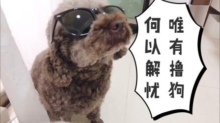 撸狗特辑——阿咩和卡丘
