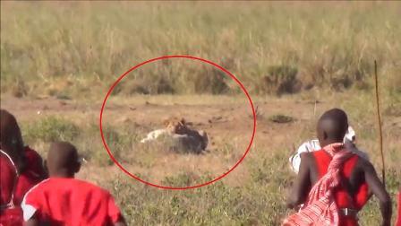 狮子为什么惧怕马赛人?跟着镜头感受一下,你也会怕