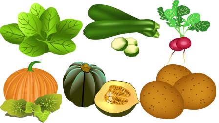 快乐英语记单词蔬菜英语快乐学习菠菜萝卜西葫芦南瓜小青南瓜土豆