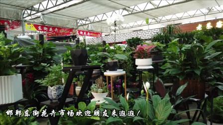 古筝《红豆曲》送给您!邯郸东街花卉市场欢迎朋友来逛逛!