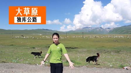 自驾游独库公路,草原上一片羊群吸引我下车,2只牧羊犬警觉起来