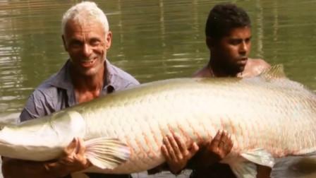 全球最笨的鱼,笨到靠政府保护才没灭绝,却在地球上生存了1亿年