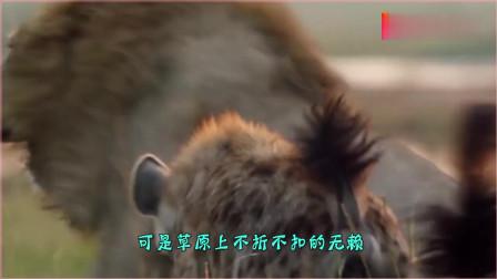 母狮惨遭鬣狗围攻,雄狮同伴前来营救,镜头记录鬣狗被灭全过程!