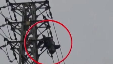 男子爬高压电塔摘马蜂窝被电击 半身挂在空中摇摇欲坠