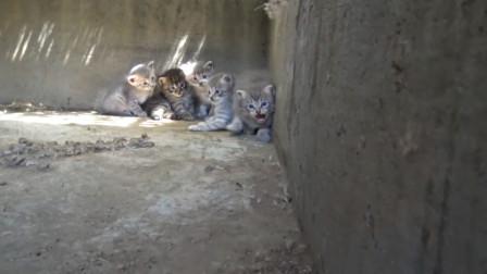 小猫被困下水道急需救援,而好心人喂养猫妈2年,却从未触摸过它