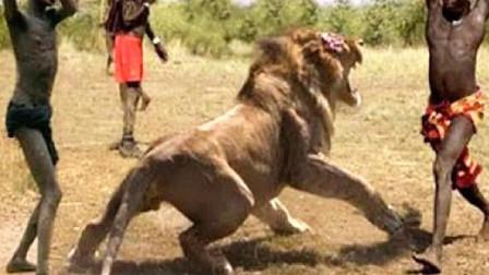 """狮子为什么惧怕""""马赛人""""?跟着镜头感受一下,说不定你也会怕"""