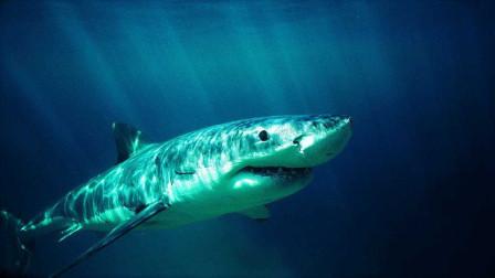 鲨鱼在地球上生存了几亿年,那它会患上癌症吗?今天算长见识了