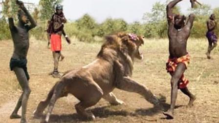 """狮子为什么惧怕""""马赛人""""?跟着镜头感受一下,难怪狮子这么怂"""