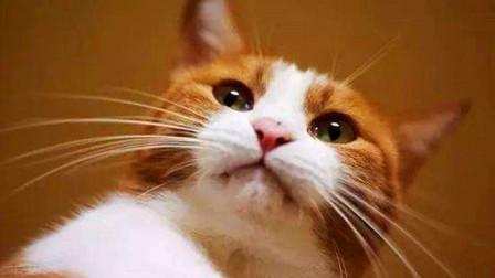 """你知道你睡着后,猫咪在对你做什么吗?其实它是在计划""""谋杀""""主人"""