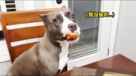 狗子:报告主人,我们真没吃