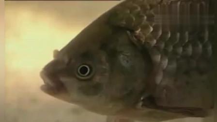鲫鱼吃饵的几种常见漂相,你能总结出几种?