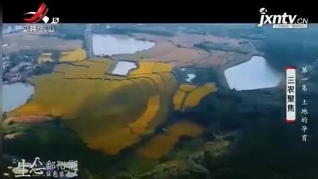万年县祖祖辈辈守护万年贡米,传承几百年的历史