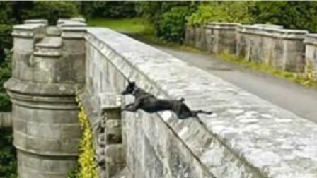 """英国这座""""鬼桥"""",让600只狗跳桥自杀,专家终于揪出桥底""""凶手"""""""