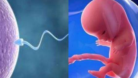 揭秘!3D动画模拟女性排卵受精到生子的全过程,看完心疼女性
