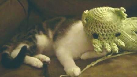 【老番茄】当你的猫被古神附体
