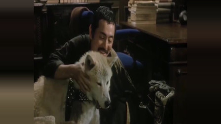 《忠犬八公物语》我不能陪你一生, 但我一生都陪着你 相约在彼此世界的车站
