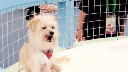 国内首只克隆狗亮相亚洲宠物展克隆费可达38万
