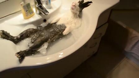 兔子一辈子都不用洗澡,还是不能洗澡?看完视频,涨知识了
