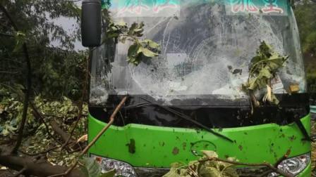 贵州一大巴车行驶中被连大树砸中 一车12人险丧命
