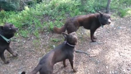 《萌宠大本营》练习静止的狗子,是不是有点太厉害了!