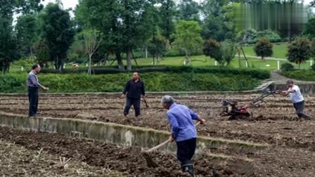 重庆:亿万富豪回归田园投一亿种水稻 称不给子女留家产