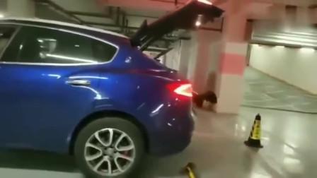 新手女司机倒车,这个人工智能雷达,我给她跪了
