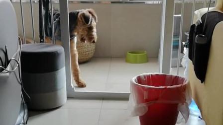 狗子,你这头型怕就是这样夹出来的吧
