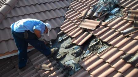 农村小伙翻修屋顶,掀开瓦片瞬间,发现下面藏着数千只小动物!