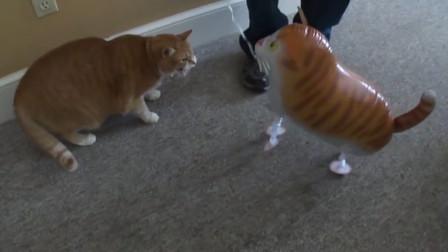 """主人给橘猫买个""""充气猫"""",结果被猫咪一巴掌拍漏气,太搞笑了"""