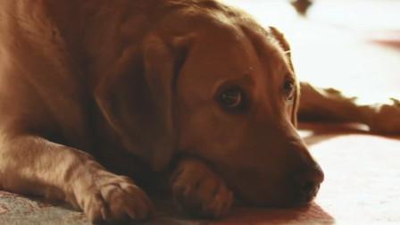 【猴姆独家】太可爱了!#唐顿庄园#大电影在国际爱狗日曝光伯爵狗狗Teo预告片!