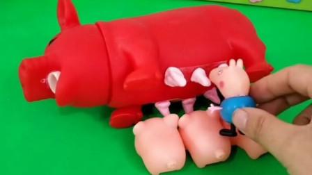 小猪们在吃奶,乔治看到后也想吃,乔治真不知道羞!