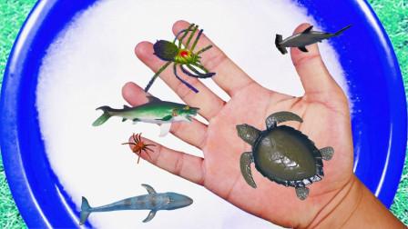 玩泡泡的动物们 鲨鱼海龟在游泳认识它们吧