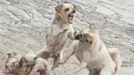 狗妈:叫你家长过来!我们打一架!