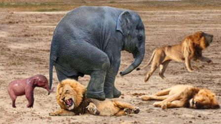 象王:敢打我小象的主意,狮子你不想混了是吧?